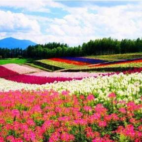 景观花海设计