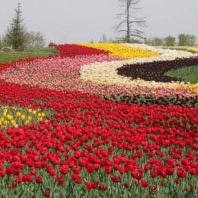 花海专用花卉