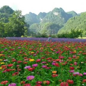 湖南怀化石门花香田园综合体480亩