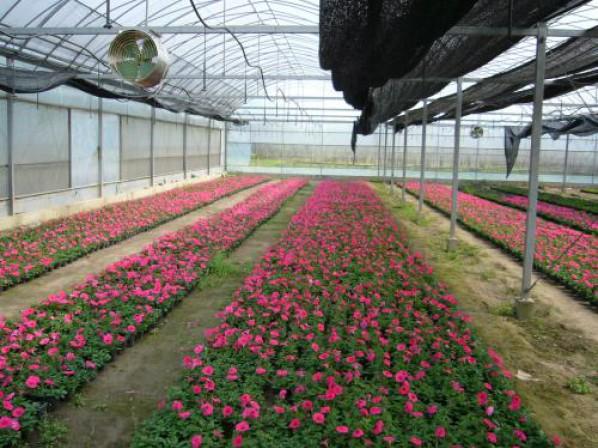 草花种子种苗